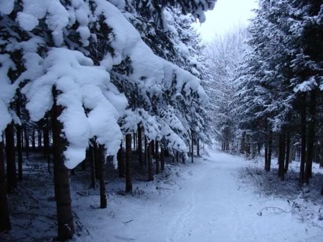 Hjarbæk Skov